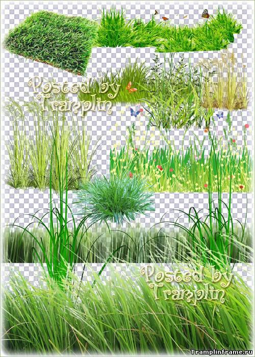 Картинки природа прозрачный фон